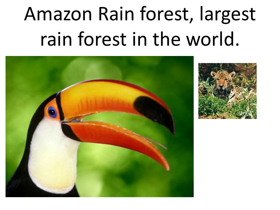 Amazon Rain forest, largest rain forest in the world.