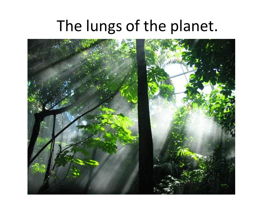 The lungs of the planet.