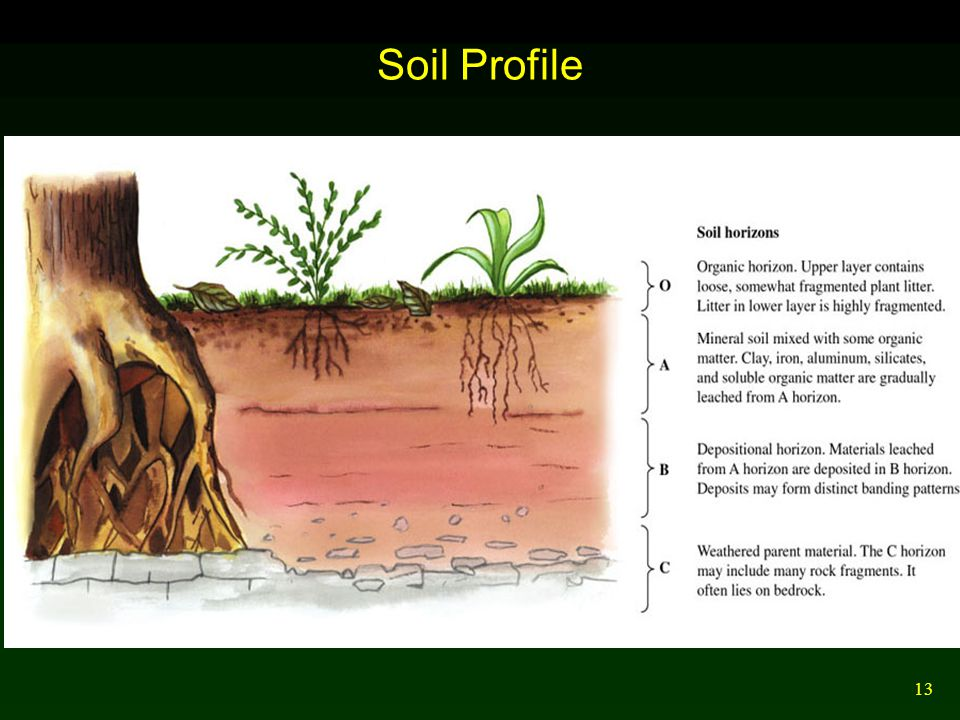 13 Soil Profile