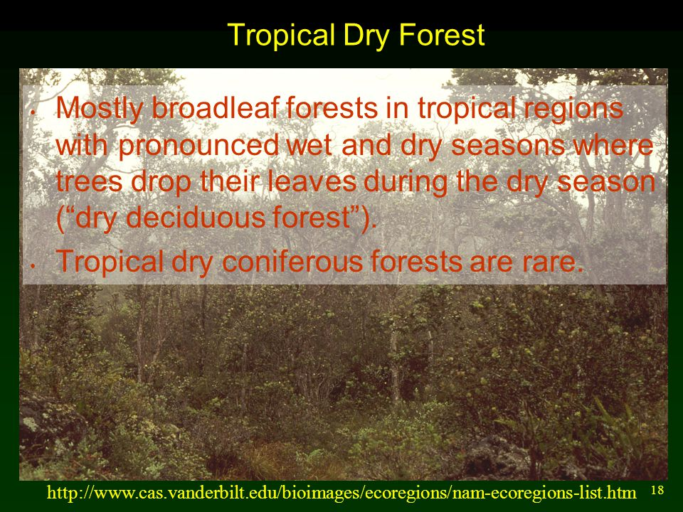 18 Tropical Dry Forest Mostly broadleaf forests in tropical regions with pronounced wet and dry seasons where trees drop their leaves during the dry s