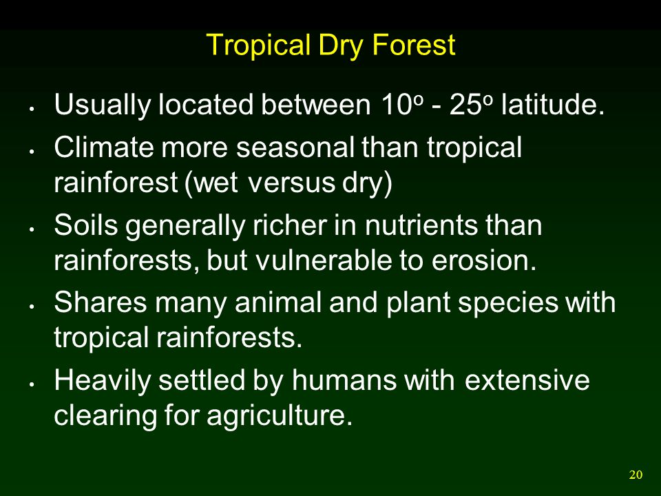 20 Tropical Dry Forest Usually located between 10 o - 25 o latitude. Climate more seasonal than tropical rainforest (wet versus dry) Soils generally r