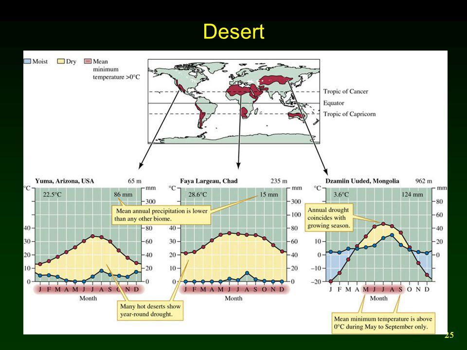25 Desert