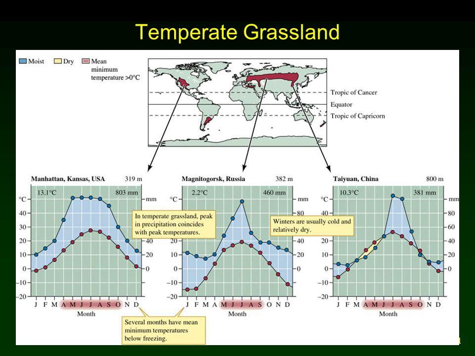 31 Temperate Grassland