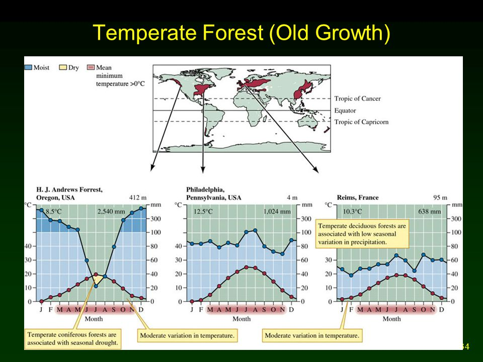 34 Temperate Forest (Old Growth)