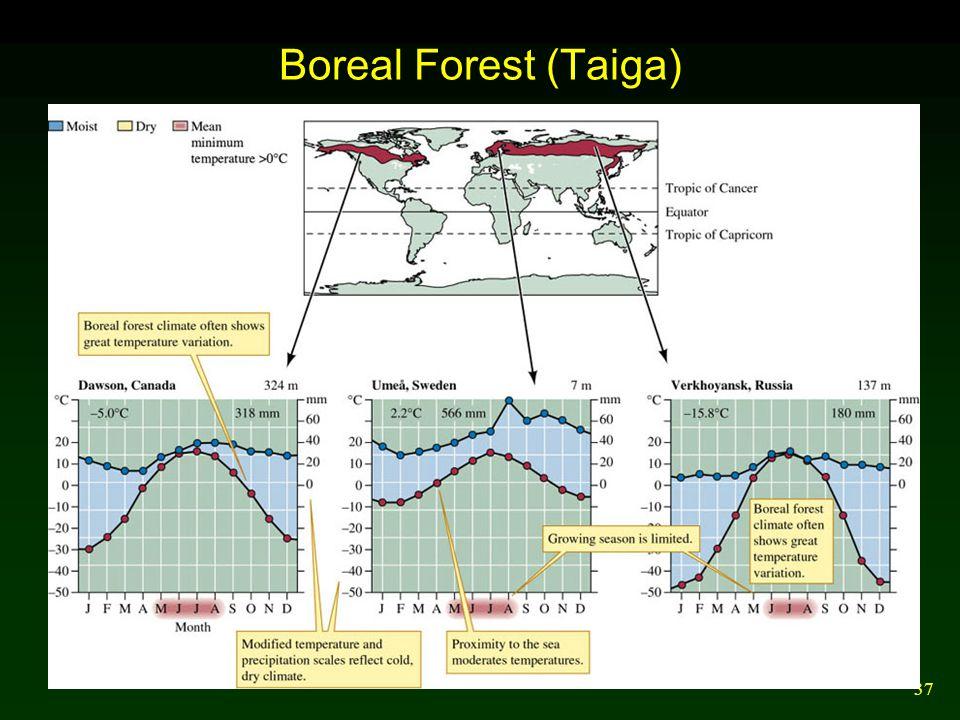 37 Boreal Forest (Taiga)