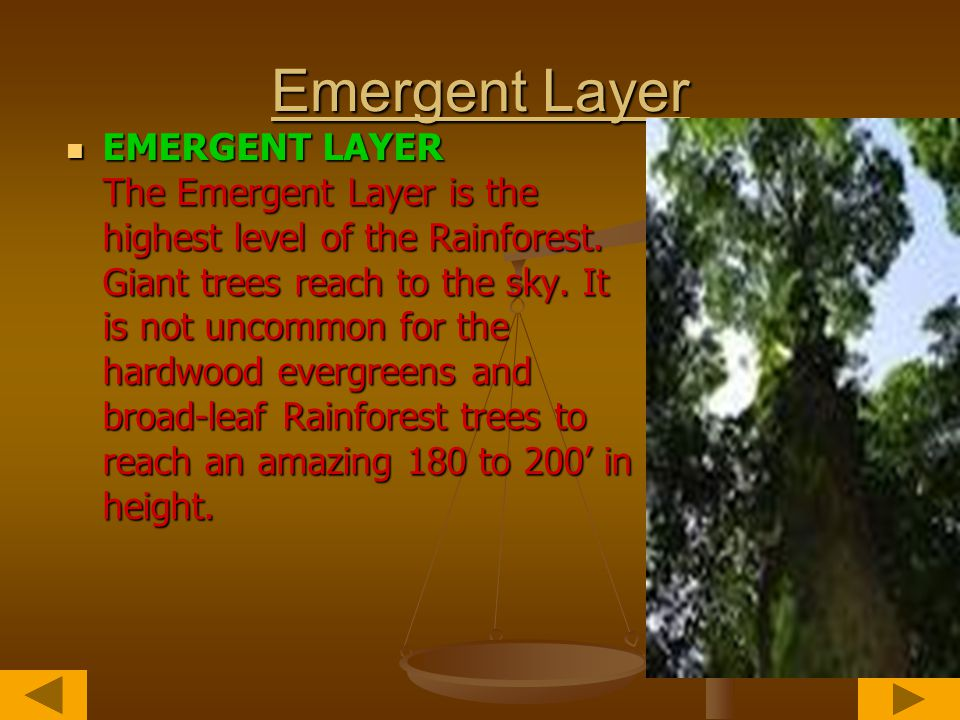 The Layers of the Rainforest There are four main parts of a rainforest.