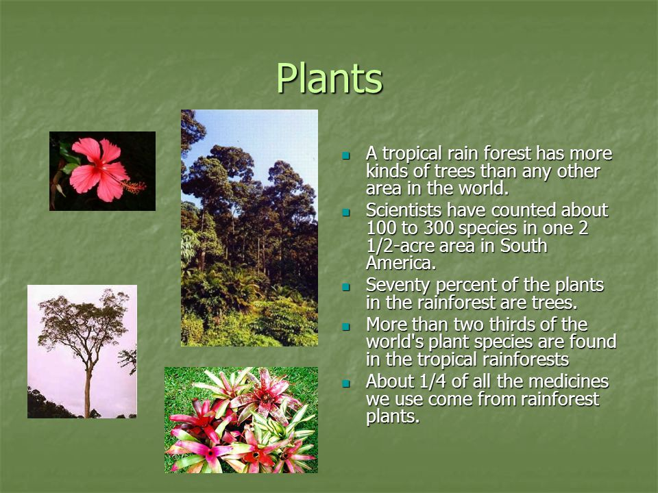 Plants A tropical rain forest has more kinds of trees than any other area in the world.