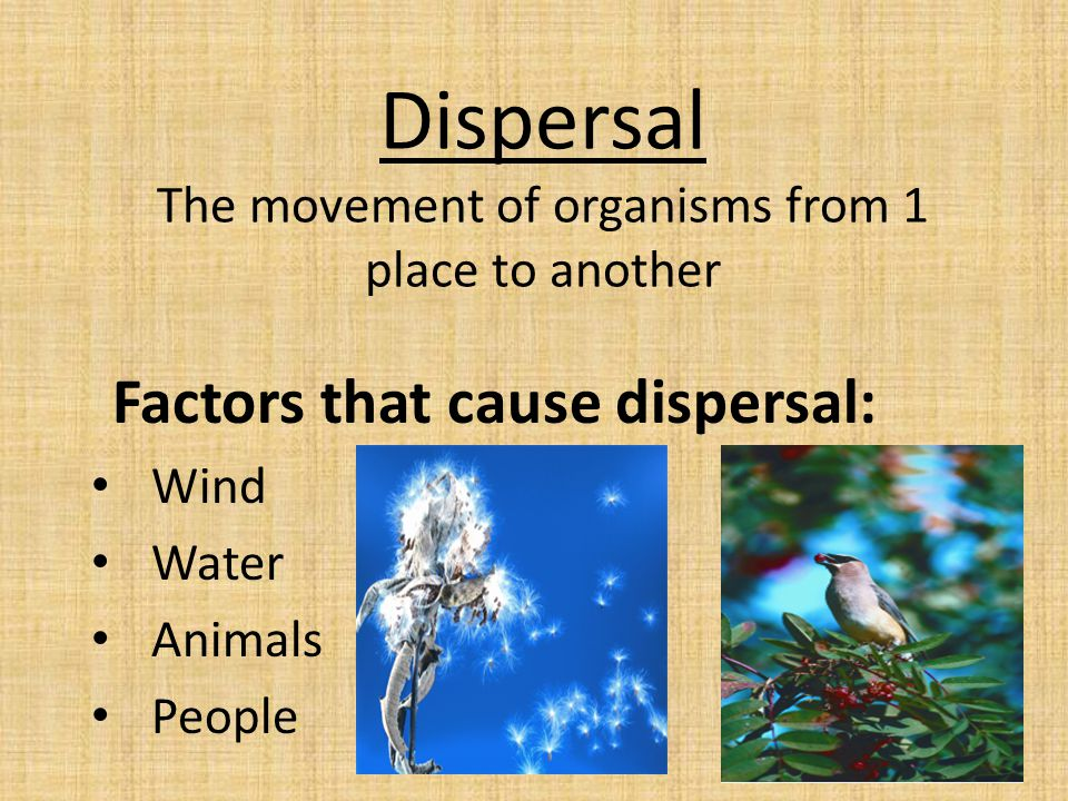 Factors that limit dispersal Physical barriers (for example water & mountains) Competition Climate