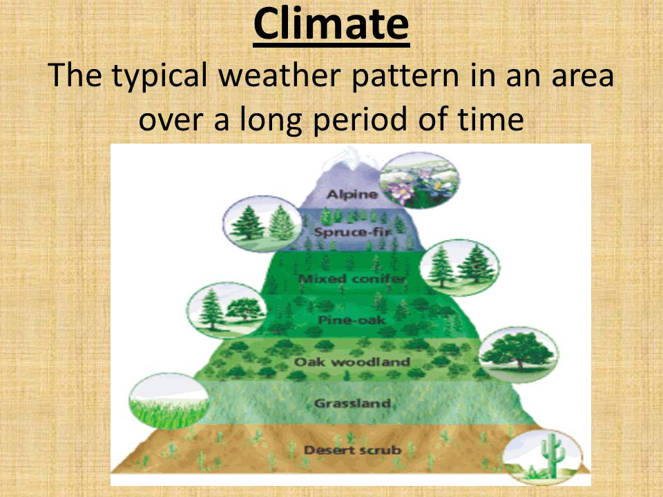 Grassland Biomes A grassland is an area that is populated mostly by grasses and other nonwoody plants.