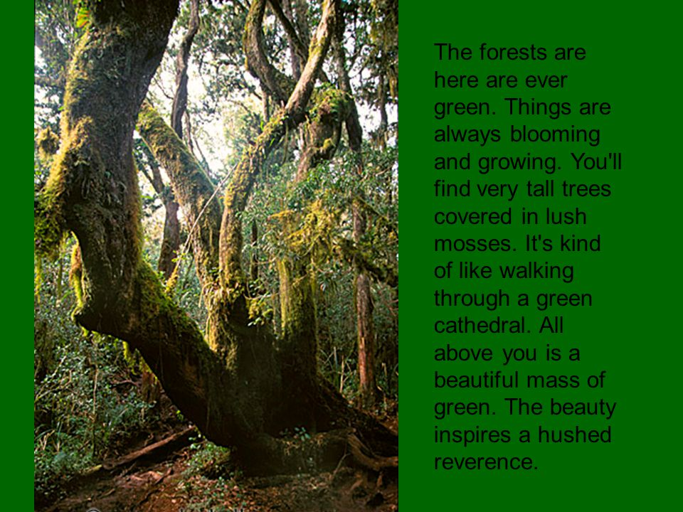 The forests are here are ever green. Things are always blooming and growing.