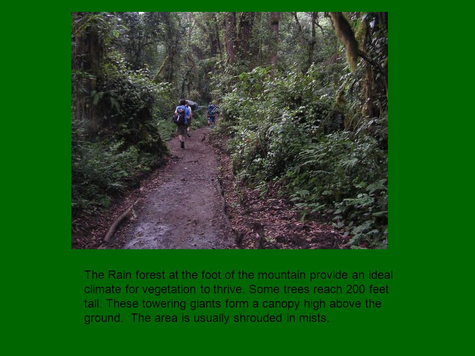 The Rain forest at the foot of the mountain provide an ideal climate for vegetation to thrive.