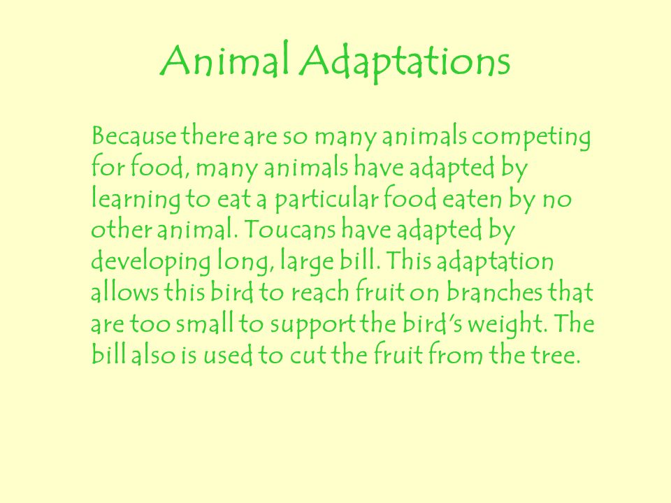 Animal Adaptations Because there are so many animals competing for food, many animals have adapted by learning to eat a particular food eaten by no ot
