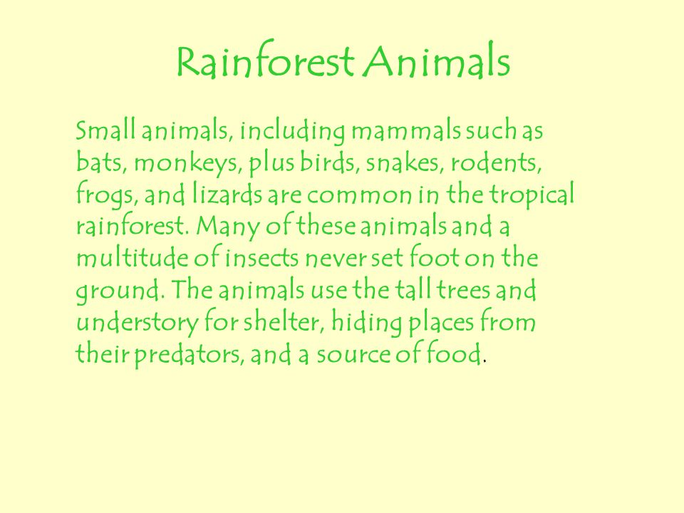 Rainforest Animals Small animals, including mammals such as bats, monkeys, plus birds, snakes, rodents, frogs, and lizards are common in the tropical