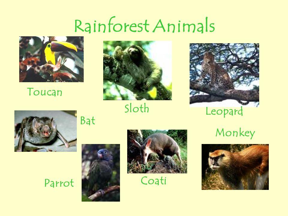 Rainforest Animals Leopard Coati Sloth Monkey Bat Parrot Toucan