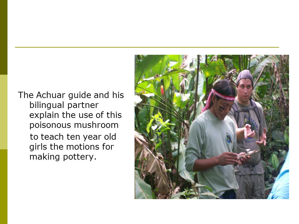 The Achuar guide and his bilingual partner explain the use of this poisonous mushroom to teach ten year old girls the motions for making pottery.