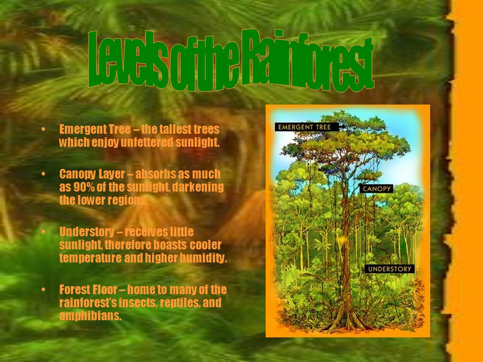 What is a rainforest.