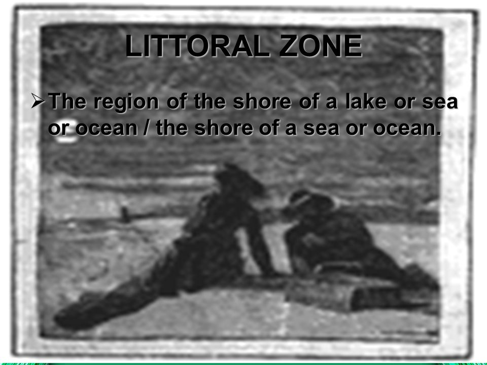 LITTORAL ZONE  The  The region of the shore of a lake or sea or ocean / the shore of a sea or ocean.
