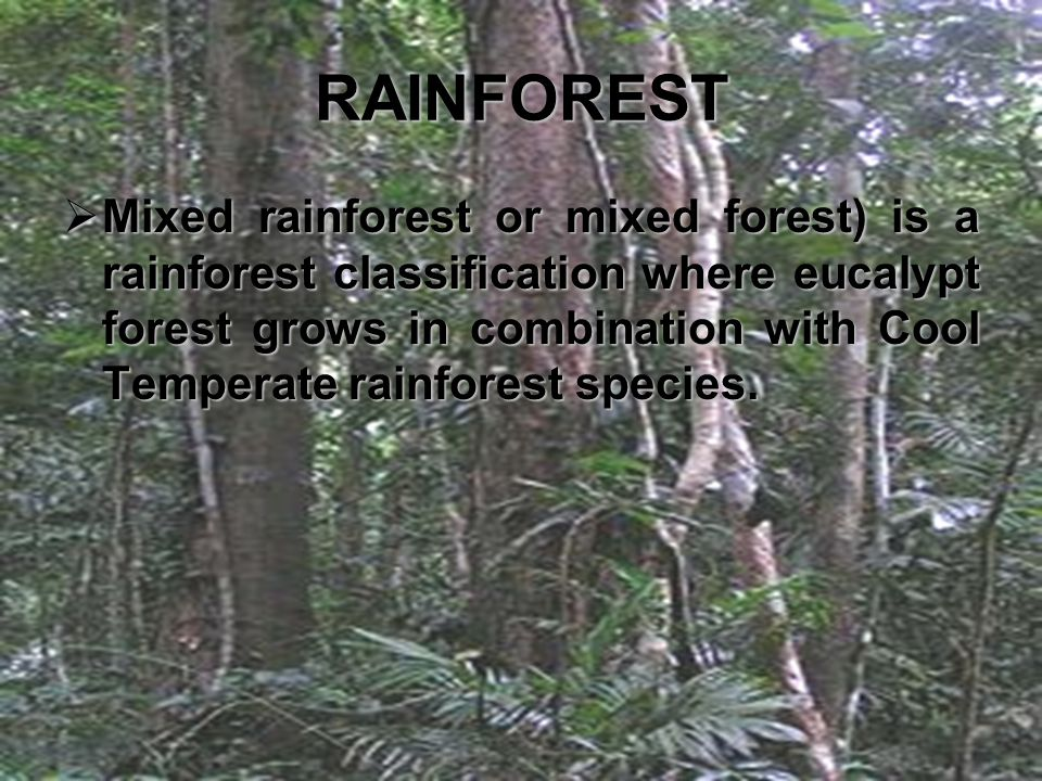 RAINFOREST  Mixed  Mixed rainforest or mixed forest) is a rainforest classification where eucalypt forest grows in combination with Cool Temperate r
