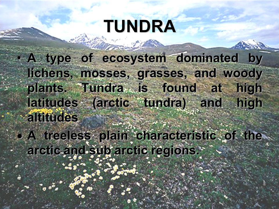 TUNDRA Atype of ecosystem dominated by lichens, mosses, grasses, and woody plants. Tundra is found at high latitudes (arctic tundra) and high altitude