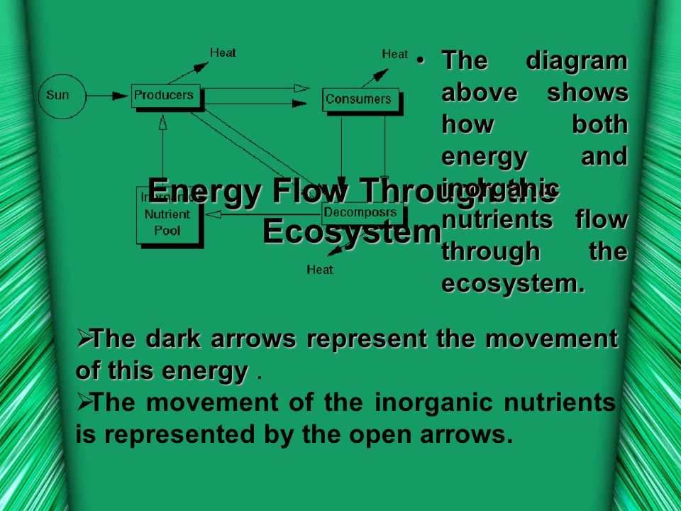  The  The dark arrows represent the movement of this energy energy.  The movement of the inorganic nutrients is represented by the open arrows. Ene