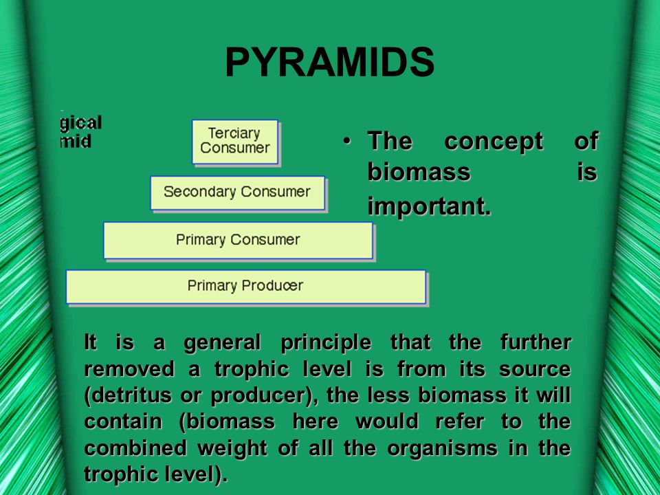 PYRAMIDS TheThe concept of biomass is important. It is a general principle that the further removed a trophic level is from its source (detritus or pr