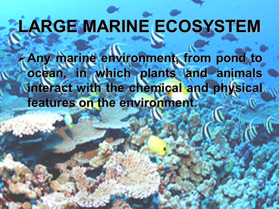 LARGE MARINE ECOSYSTEM AAAAny marine environment, from pond to ocean, in which plants and animals interact with the chemical and physical features