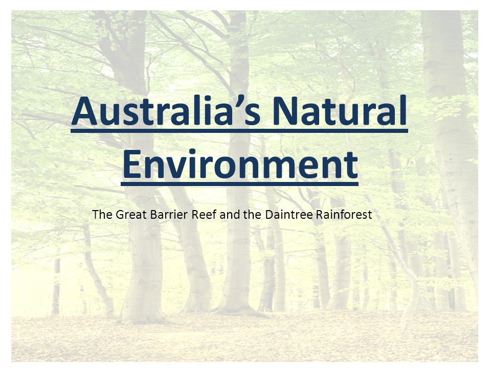 Australia's Natural Environment The Great Barrier Reef and the Daintree Rainforest