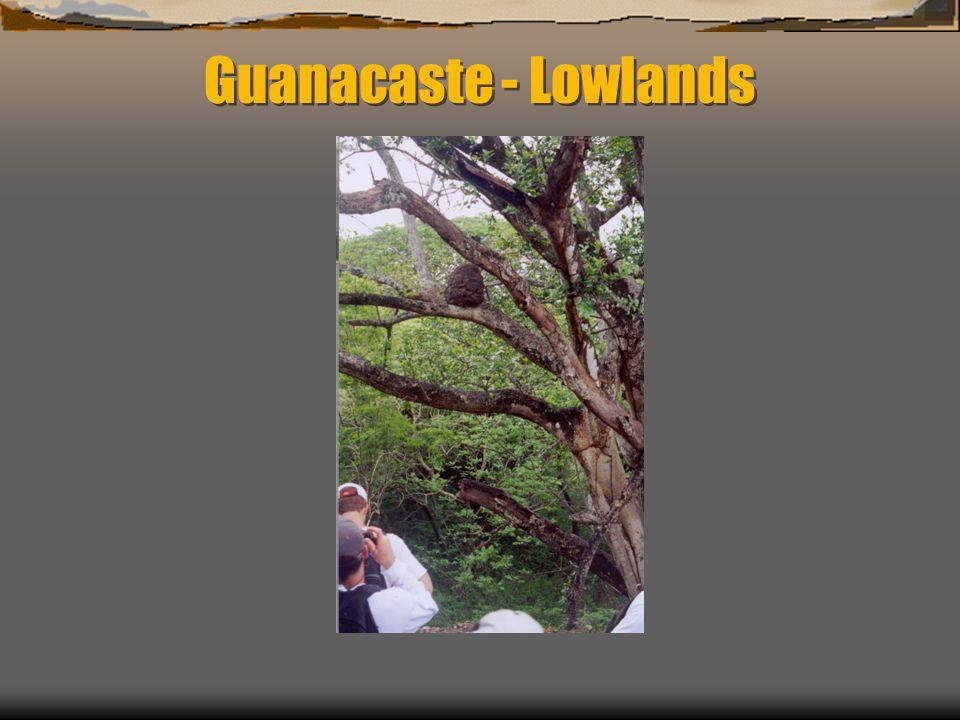 Guanacaste - Lowlands
