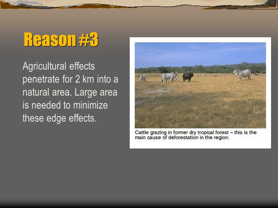 Reason #3 Agricultural effects penetrate for 2 km into a natural area.