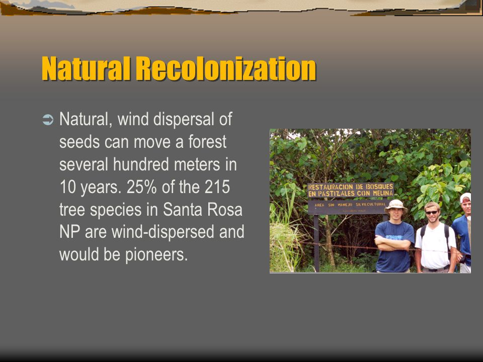 Natural Recolonization  Natural, wind dispersal of seeds can move a forest several hundred meters in 10 years.