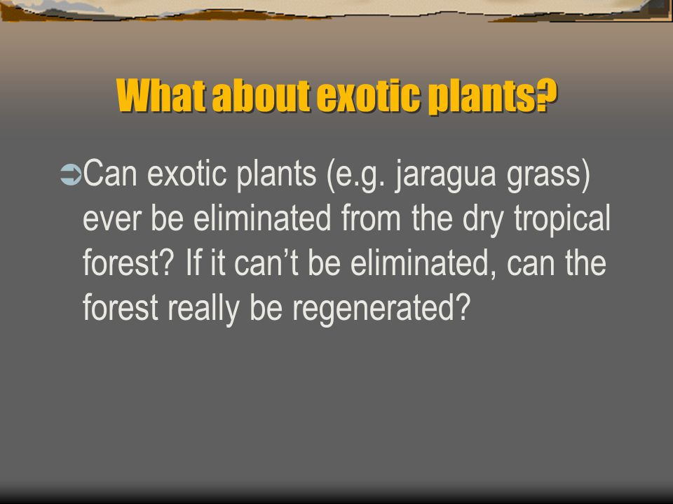 What about exotic plants.  Can exotic plants (e.g.