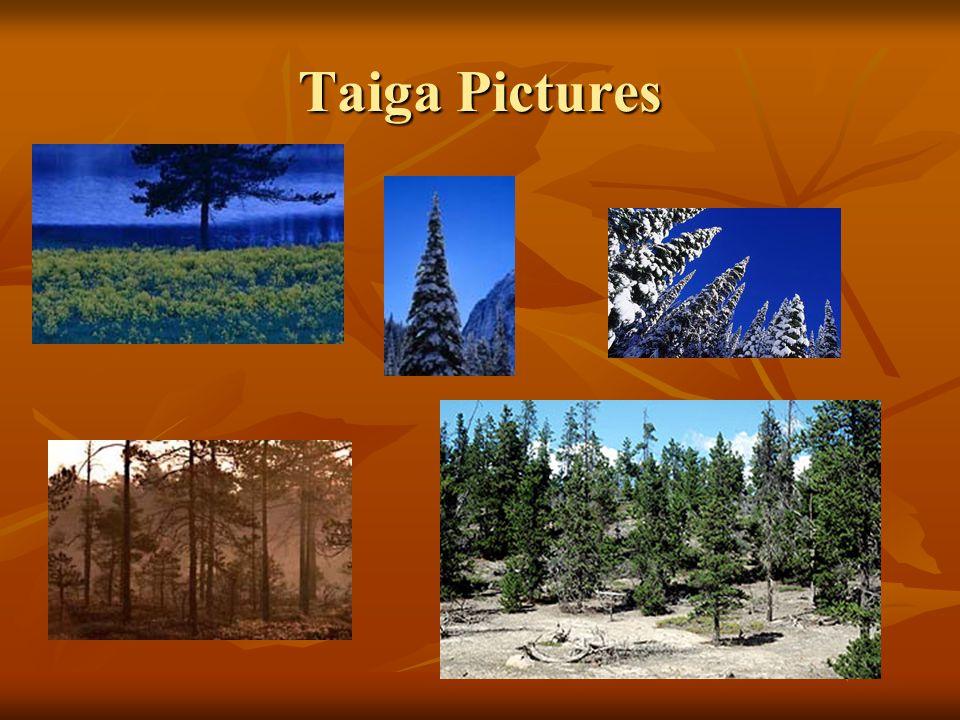 Taiga Pictures