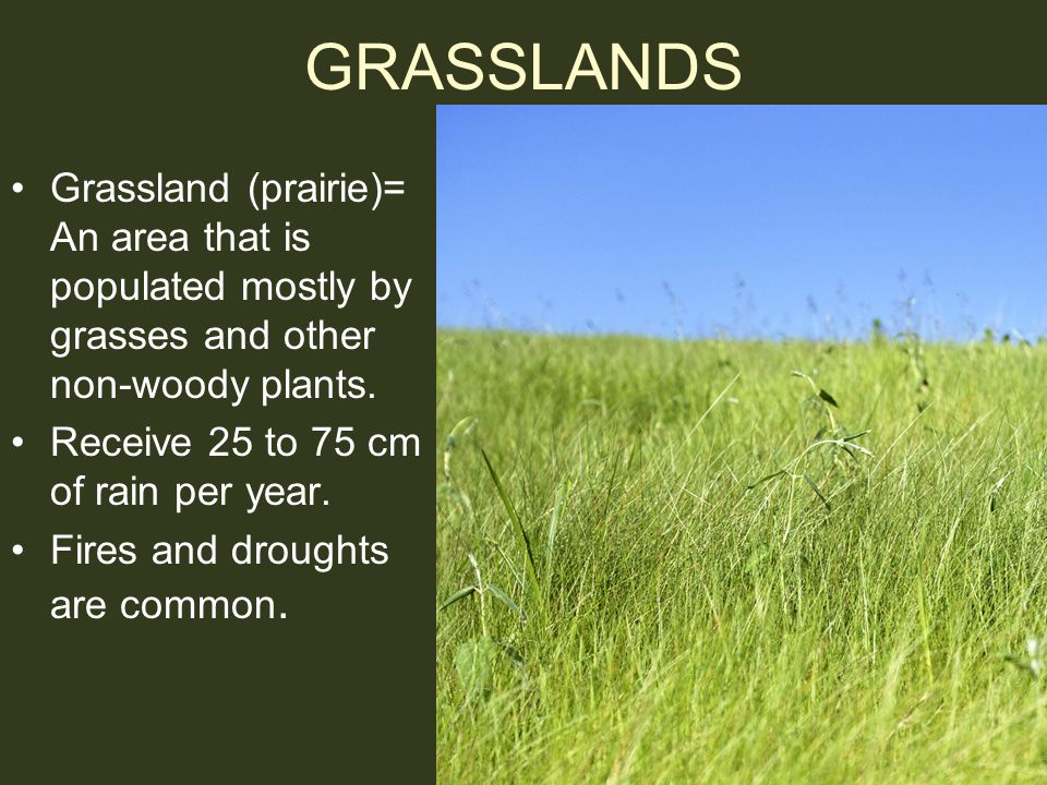 GRASSLANDS Grassland (prairie)= An area that is populated mostly by grasses and other non-woody plants. Receive 25 to 75 cm of rain per year. Fires an