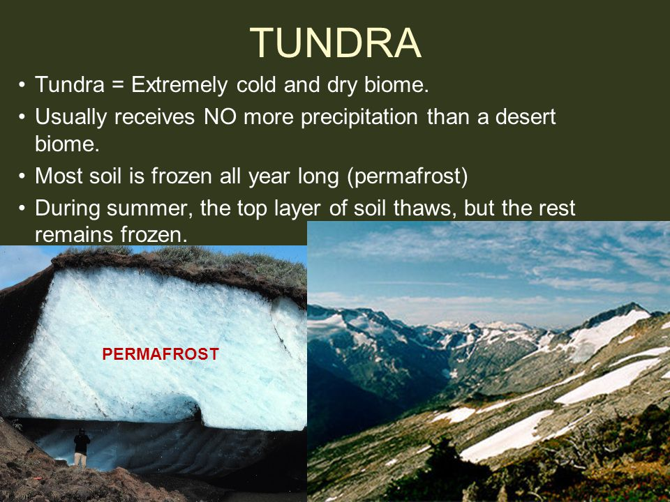 TUNDRA Tundra = Extremely cold and dry biome. Usually receives NO more precipitation than a desert biome. Most soil is frozen all year long (permafros