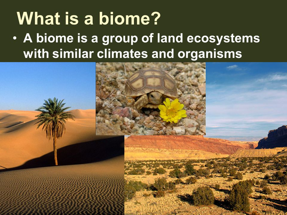 What is a biome? A biome is a group of land ecosystems with similar climates and organisms