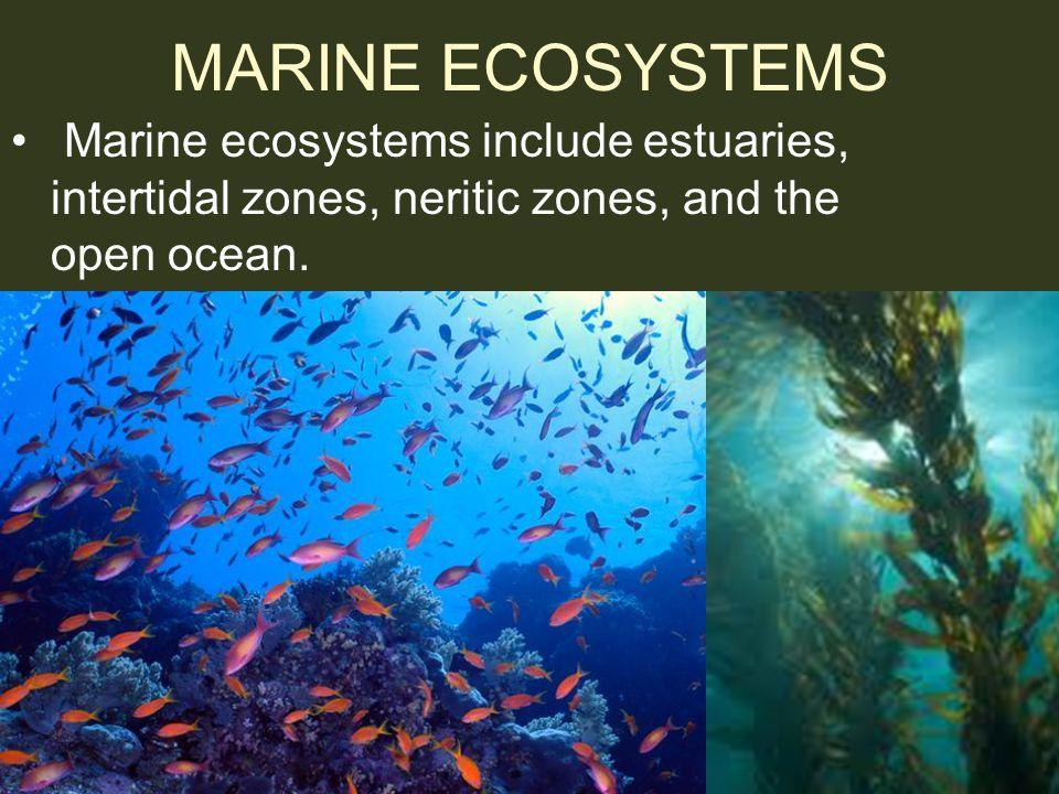 MARINE ECOSYSTEMS Marine ecosystems include estuaries, intertidal zones, neritic zones, and the open ocean.