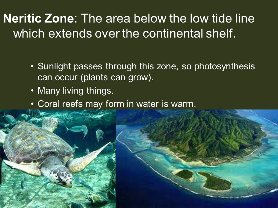 Neritic Zone: The area below the low tide line which extends over the continental shelf. Sunlight passes through this zone, so photosynthesis can occu
