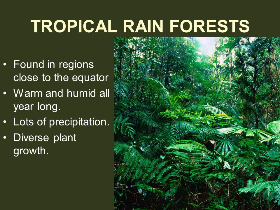 Trees in the rain forest form several layers… Canopy: A leafy roof formed by the tallest trees.