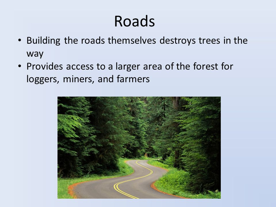 Roads Building the roads themselves destroys trees in the way Provides access to a larger area of the forest for loggers, miners, and farmers
