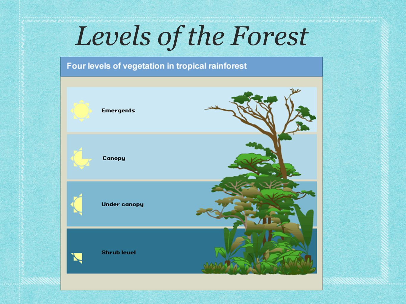 Unique Features *Occur near the equator *The layered system *High biodiversity *Over 25% of natural medicines have been discovered in the rainforest *Hot/ warm and humid year long