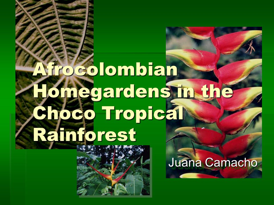 Afrocolombian Homegardens in the Choco Tropical Rainforest Juana Camacho