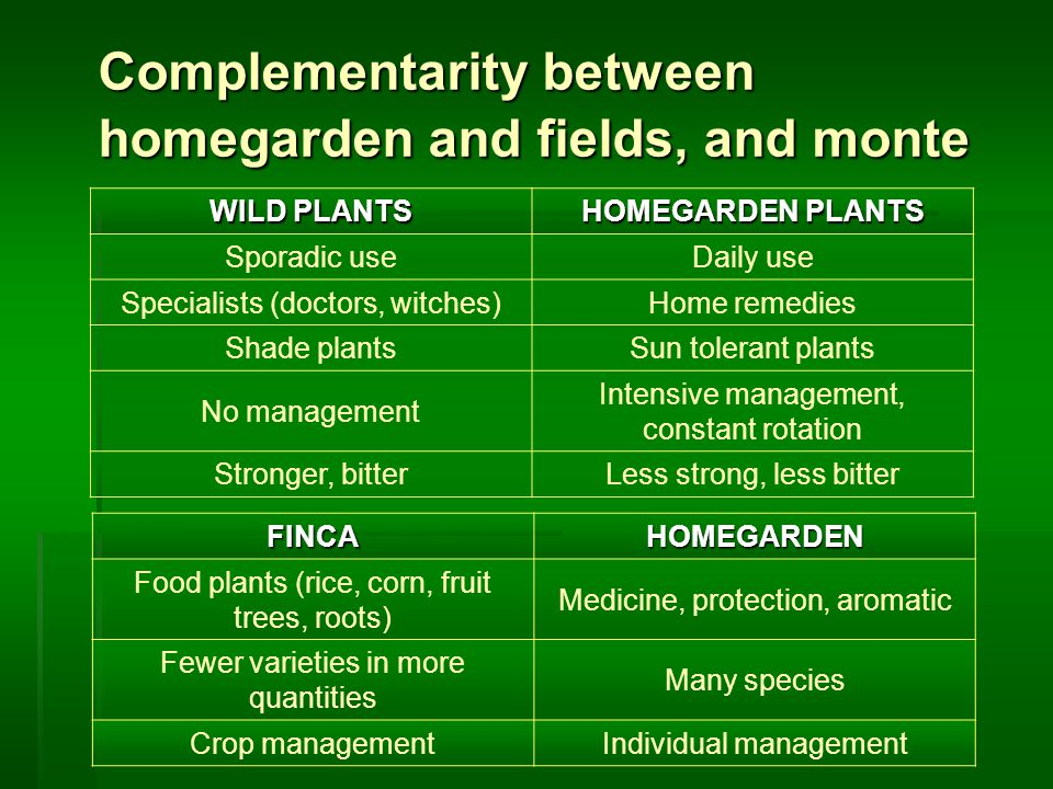 Complementarity between homegarden and fields, and monte WILD PLANTS HOMEGARDEN PLANTS Sporadic useDaily use Specialists (doctors, witches)Home remedies Shade plantsSun tolerant plants No management Intensive management, constant rotation Stronger, bitterLess strong, less bitter FINCAHOMEGARDEN Food plants (rice, corn, fruit trees, roots) Medicine, protection, aromatic Fewer varieties in more quantities Many species Crop managementIndividual management