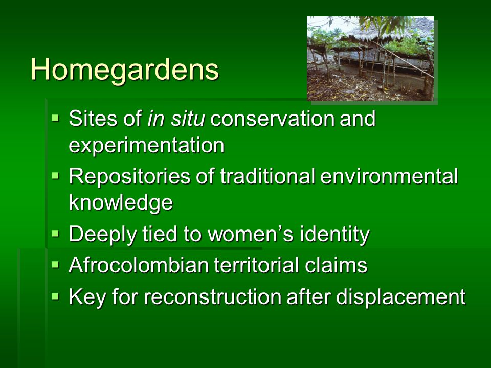 Homegardens  Sites of in situ conservation and experimentation  Repositories of traditional environmental knowledge  Deeply tied to women's identity  Afrocolombian territorial claims  Key for reconstruction after displacement