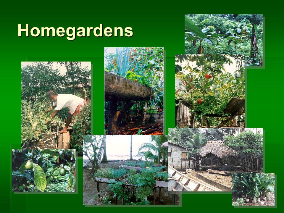 Homegardens