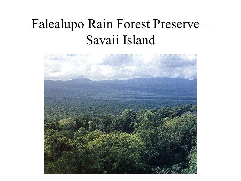 Falealupo Rain Forest Preserve – Savaii Island