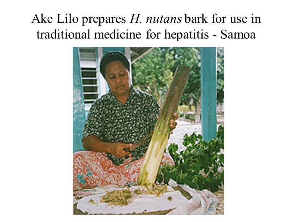 Ake Lilo prepares H. nutans bark for use in traditional medicine for hepatitis - Samoa