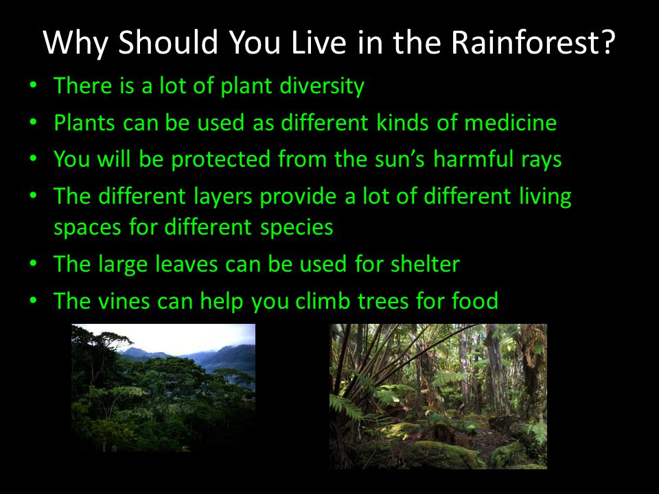 Why Should You Live in the Rainforest.