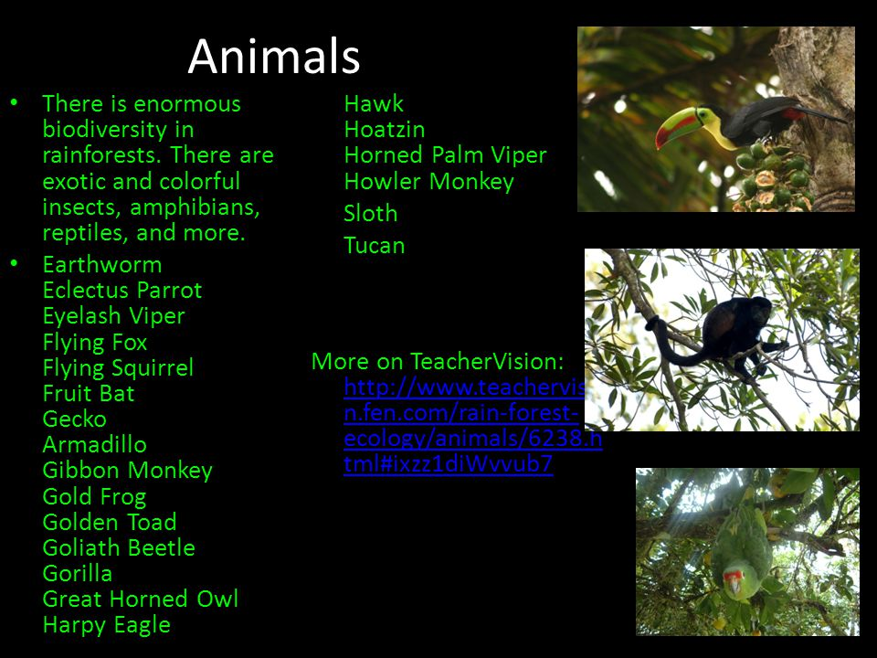 Animals There is enormous biodiversity in rainforests.