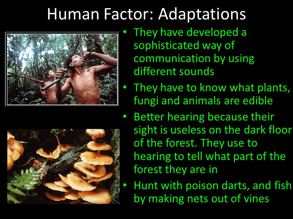 Human Factor: Adaptations They have developed a sophisticated way of communication by using different sounds They have to know what plants, fungi and animals are edible Better hearing because their sight is useless on the dark floor of the forest.