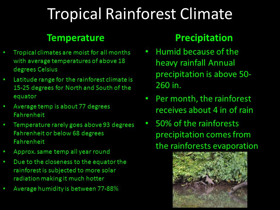 Tropical Rainforest Climate Pictures from: http://www.geographyhigh.connec tfree.co.uk/s4wstrfstuds.html